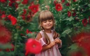 Картинка цветы, природа, улыбка, заросли, платье, девочка, косички, ребёнок, мальва