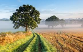 Картинка grass, sky, trees, landscape, nature, mist, Field