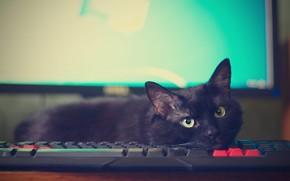 Картинка кошка, компьютер, кот, взгляд, поза, черный, мордочка, лежит, клавиатура, монитор