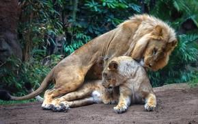 Обои эротика, взгляд, листья, природа, поза, растения, лев, пара, лежит, влюбленные, дикие кошки, львица, два, секс, ...
