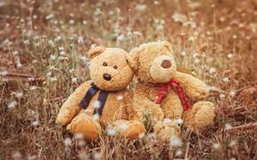 Картинка любовь, игрушка, медведь, мишка, пара, love, двое, bear, field, romantic, couple, teddy, cute