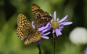 Картинка бабочки, цветы, фон, пара, Martin Dollenkamp