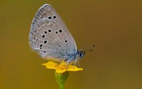 Картинка цветок, бабочка, ррроник