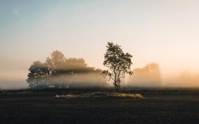 Картинка поле, осень, туман, утро, берёза