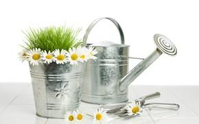 Картинка трава, цветы, ромашки, ведро, белый фон, лейка