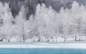Картинка зима, снег, деревья, Алтай