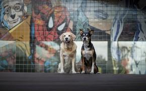 Картинка собаки, улица, друзья