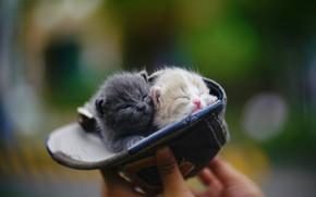 Картинка рука, сон, малыши, бейсболка, в шляпе, размытый задний фон, крошки, закрытые глаза, два котёнка
