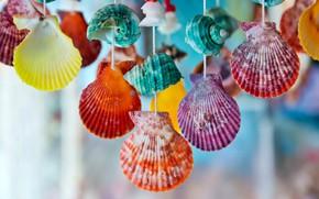 Картинка colorful, ракушки, marine, seashells