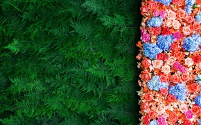 Картинка цветы, ветки, фон, розы, colorful, хвоя, flowers, roses