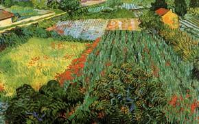 Картинка цветы, кусты, Vincent van Gogh, Poppies, участки, Field with