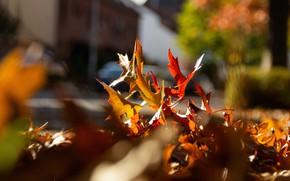Картинка осень, свет, боке, осенние листья