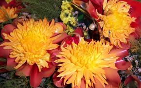 Картинка цветы, букет, хризантемы, Meduzanol ©