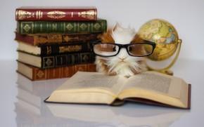 Картинка игрушка, книги, очки, книга, морская свинка, глобус, грызет гранит науки, ученая, ученье свет а не …