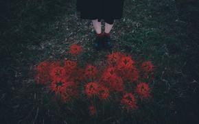 Картинка трава, цветы, ноги