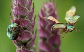 Картинка трава, фон, жуки