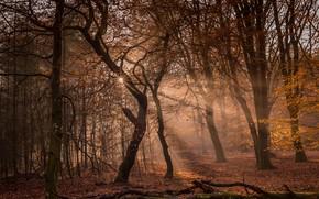 Картинка осень, лес, солнце, лучи, свет, деревья, ветки, природа, туман, парк, стволы, кривые, тропинка, осенний, коряги