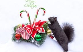 Картинка белка, Рождество, белый фон, Новый год, рождественский венок