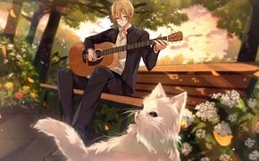 Картинка гитара, парень, играет, в парке, белый кот, садовые цветы, на скамейке