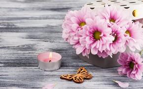 Картинка коробка, подарок, Розовая, хризантема, IRINA BORT