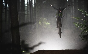 Картинка лес, деревья, ветви, сумрак, велосипедист