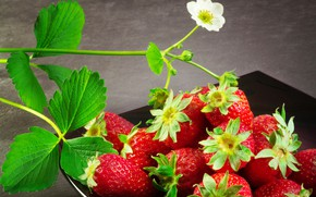 Обои листья, цветы, земляника, ягода