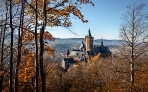 Картинка осень, солнце, деревья, пейзаж, природа, замок, Германия, Schloss Wernigerode