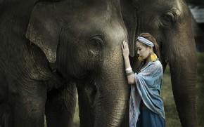 Картинка девушка, природа, слон