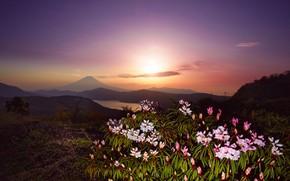 Картинка небо, солнце, свет, пейзаж, закат, цветы, горы, холмы, куст, гора, вечер, вулкан, Япония, Фудзи, Фудзияма, …