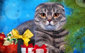 Картинка кошка, кот, ветки, фон, новый год, ель, подарки