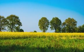 Картинка зелень, небо, трава, солнце, деревья, цветы, весна, Германия, луг, жёлтые, Emsland