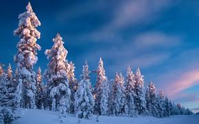 Картинка зима, дорога, лес, небо, снег, деревья, ели, Финляндия, Finland, Lapland, Лапландия