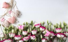 Картинка цветы, сердце, pink, flowers, romantic, hearts, эустома, eustoma