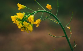 Картинка макро, фон, жёлтые цветочки, Rodrigo Godinez