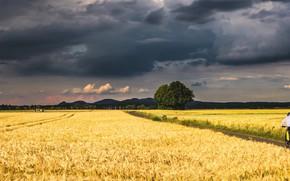 Картинка поле, лето, небо, деревья, горы, тучи, дерево, человек, рожь, простор, велосипедист, колосья, злаки, грозовые, рожаное …