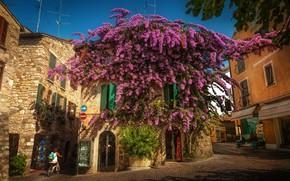 Обои дерево, дома, Италия, Italy, цветущее, улочка, Ломбардия, Lombardy, Сирмионе, Sirmione, Бугенвиллея