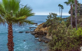 Картинка море, небо, камни, пальмы, побережье, горизонт, Калифорния, США, Laguna Beach