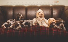 Картинка собаки, уют, диван