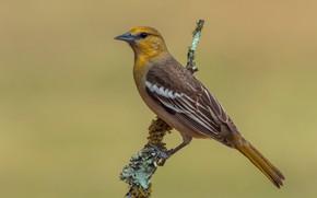 Картинка птица, ветка, bird
