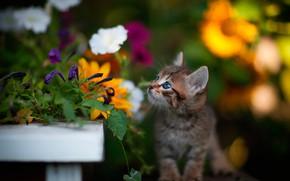 Картинка цветы, малыш, котёнок, боке
