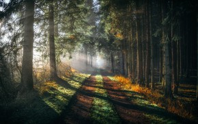 Картинка дорога, лес, туман