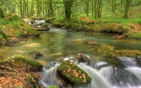 Картинка вода, деревья, река, камни, течение
