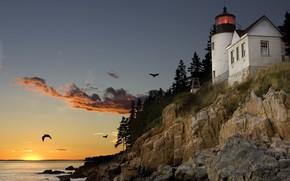 Картинка закат, птицы, скала, маяк, чайки, порт, залив, США, Мэн, Бар-Харбор