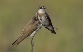 Картинка птицы, природа, веточка, фон, птичка, DUELL ©