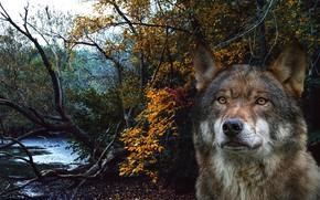 Картинка лес, морда, рендеринг, волк, портрет