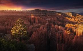 Картинка дерево, скалы, каньон, Аризона, США