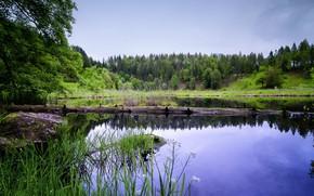 Картинка цветы, озеро, Зелень, вечер