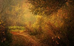 Картинка лес, тропинка, digital painting