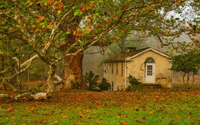 Картинка осень, листья, дом, дерево