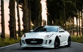 Картинка Jaguar, GTR, R400, Performance, F Type, Ritter